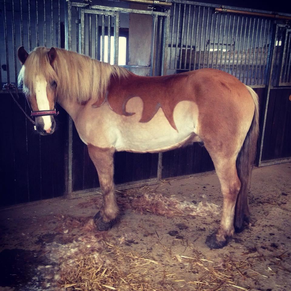 scherservice - Pferd Scheren Muster
